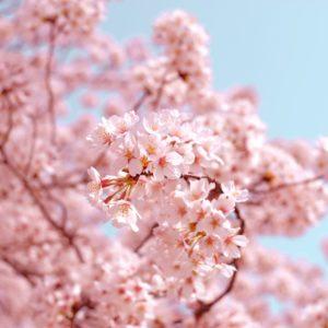 Spa des Capucins - Cadeau Bien-être Rêve du Japon